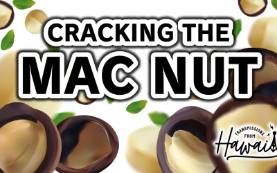 Cracking the Mac Nut: Exploring the Fascinating History of the Macadamia | Transmissions from Hawaii 03